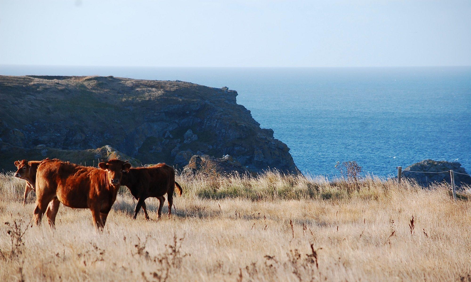Réseau Agricole des Iles Atlantiques